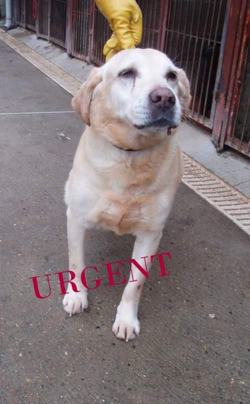 [URGENT AVANT EUTHA] Le refuge affiche complet - 4 chiens vous attendent ! (Picardie) 1_500_10
