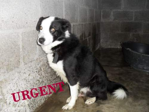 [URGENT AVANT EUTHA] Le refuge affiche complet - 4 chiens vous attendent ! (Picardie) 1_500_11