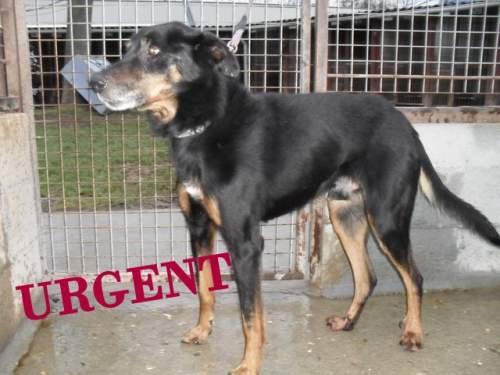 [URGENT AVANT EUTHA] Le refuge affiche complet - 4 chiens vous attendent ! (Picardie) 1_500_12