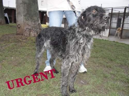 [URGENT AVANT EUTHA] Le refuge affiche complet - 4 chiens vous attendent ! (Picardie) 1_500_14