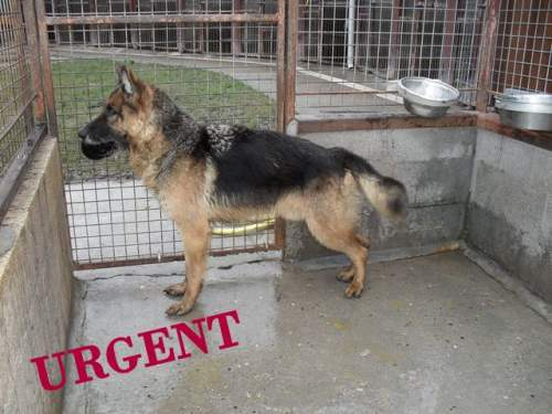 [URGENT AVANT EUTHA] Le refuge affiche complet - 4 chiens vous attendent ! (Picardie) 1_500_16