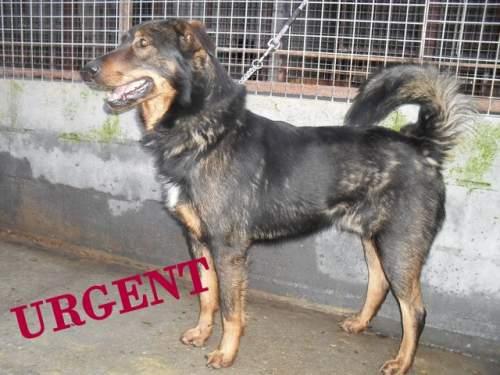 [URGENT AVANT EUTHA] Le refuge affiche complet - 4 chiens vous attendent ! (Picardie) 1_500_18