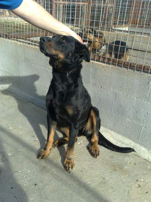 [URGENT AVANT EUTHA] Le refuge affiche complet - 4 chiens vous attendent ! (Picardie) 1_500_19