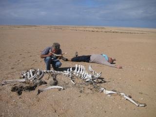 Mauvais temps au Maroc (Déc 2010) Pict0410