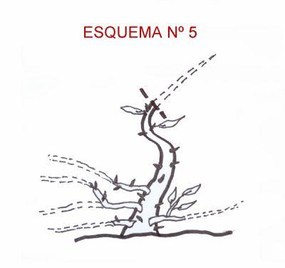 Técnicas de Engorde por Huang Ho Esquem48