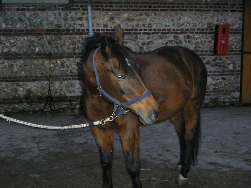 Elybel 16ans  - placé hors association 00312