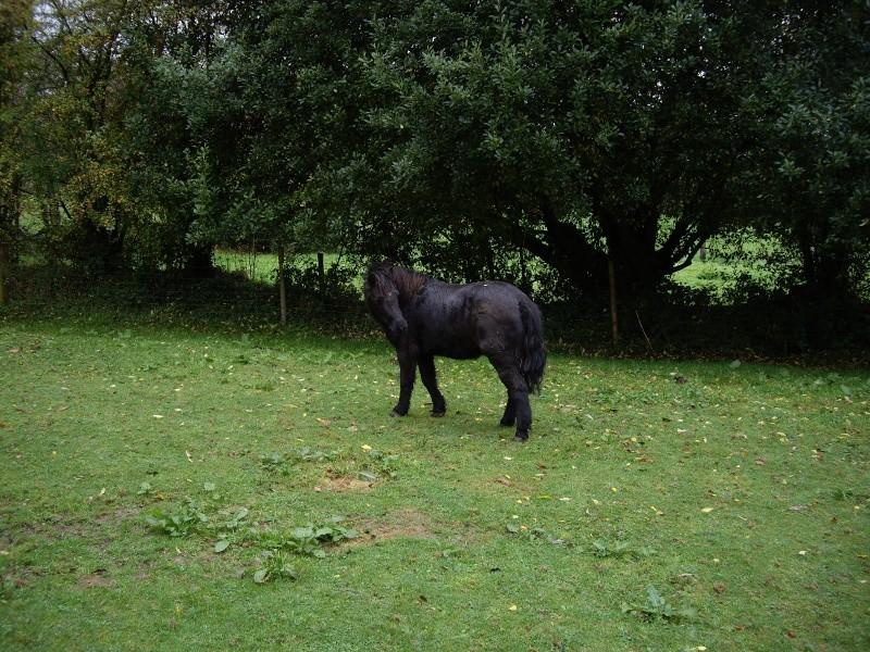 KIRIKOU - ONC poney né en 2003 - adopté en mars 2009 par Asa et fick63 Imgp1110