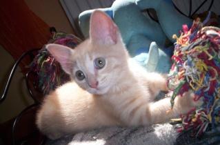 Urgent erreur sur chaton avec un vermifuge Garfie11