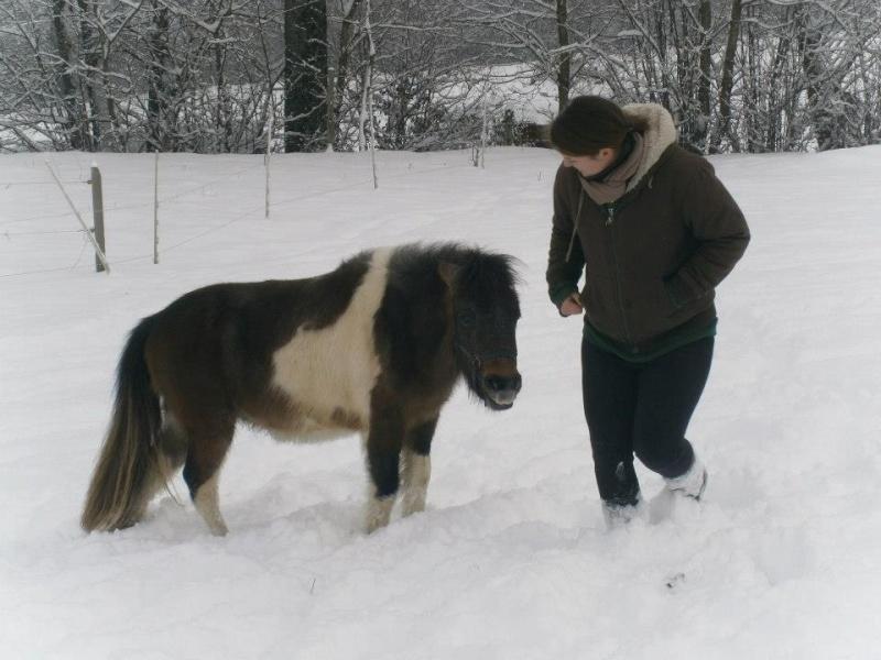 GUIZMO - Shetland  né en 2011 - Adopté en décembre 2011 par jennyetdiego - Page 2 Guizmo12