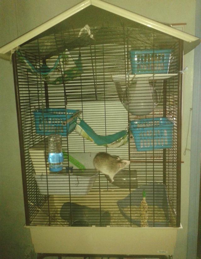 Photos de vos cages - Page 37 2013-126