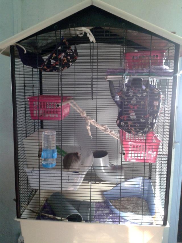 Photos de vos cages - Page 37 2013-131