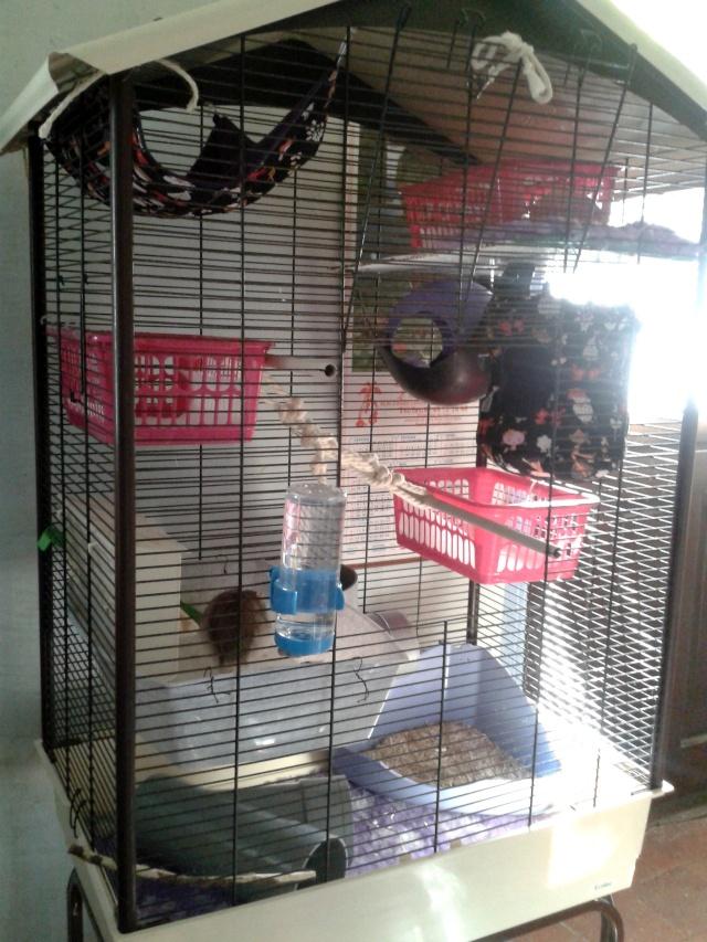 Photos de vos cages - Page 37 2013-132
