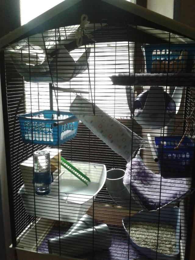 Photos de vos cages - Page 37 2013-145