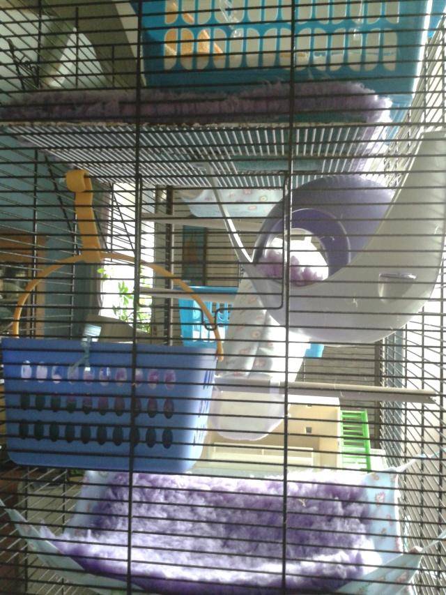 Photos de vos cages - Page 37 2013-146