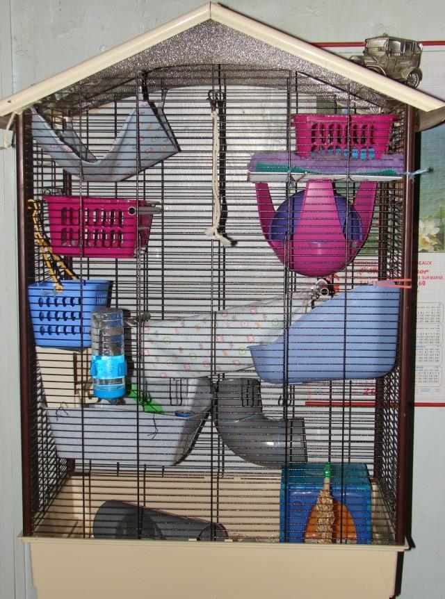 Photos de vos cages - Page 37 Dsc00013