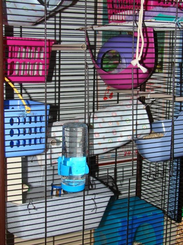 Photos de vos cages - Page 37 Dsc00014