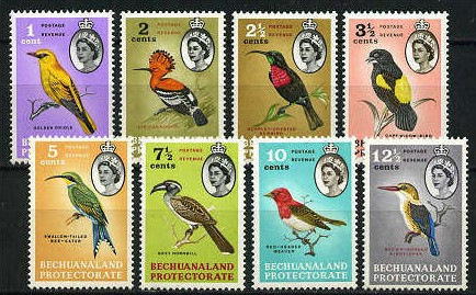 Vögel Bechua10
