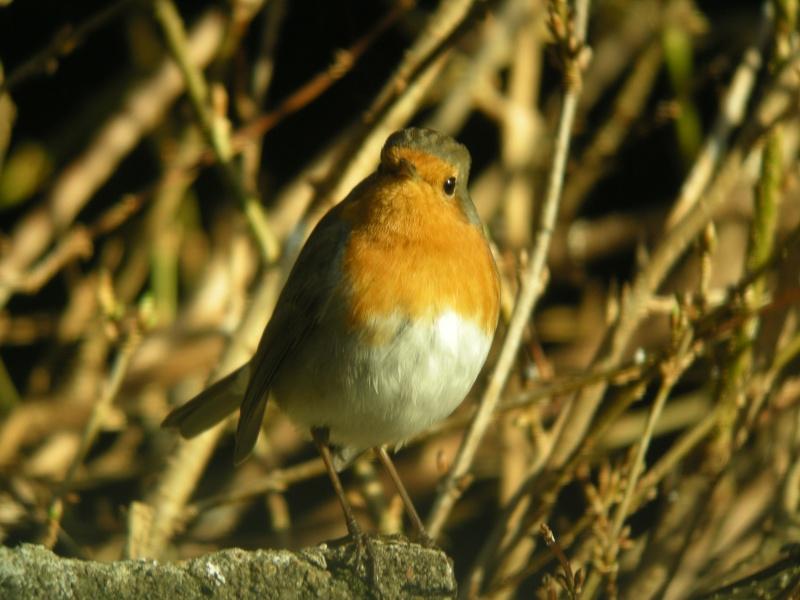 oiseau dans votre jardin? Dscn0410