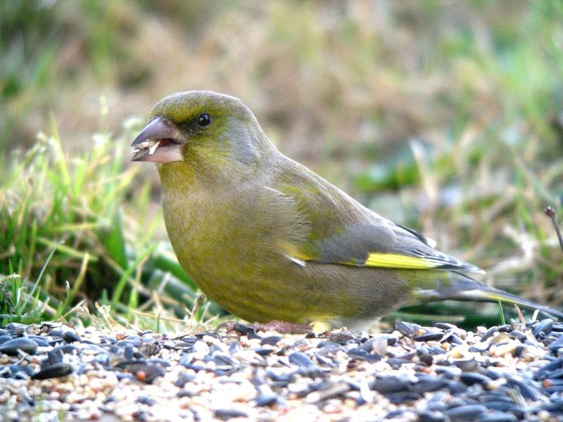 oiseau dans votre jardin? Dscn0412