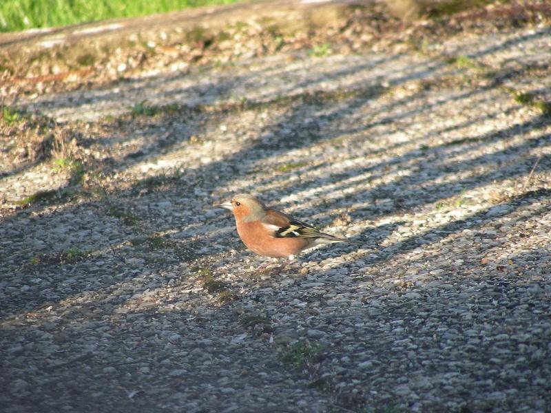 oiseau dans votre jardin? Dscn0511