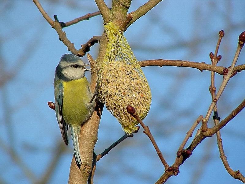 oiseau dans votre jardin? Masang10