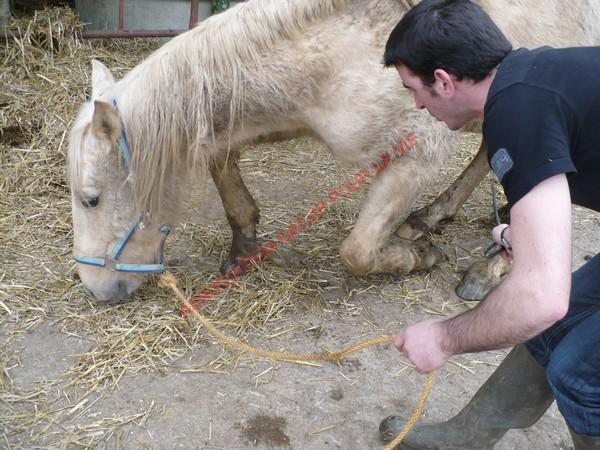 BANDEROS dit LULU- Palomino né en 2003 - adopté en mars 2011 par Isaline Bander16