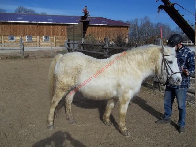 GAMINE (ex ELITE) - ONCS née en 1993 - adoptée en mars 2011 par souris25 Elite_11