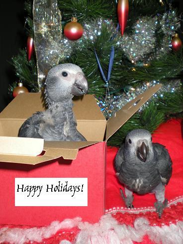 Happy holidays! Xmasca10