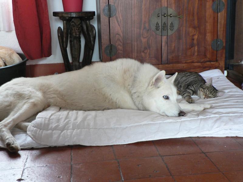 NEMO, gentil mâle husky blanc qui adore les enfants - Page 5 P1130510