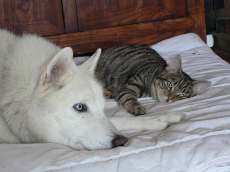 NEMO, gentil mâle husky blanc qui adore les enfants - Page 5 P1130511