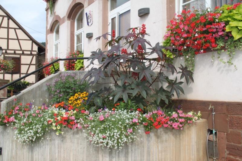 Fleurs de Wangen 2013 Img_9916