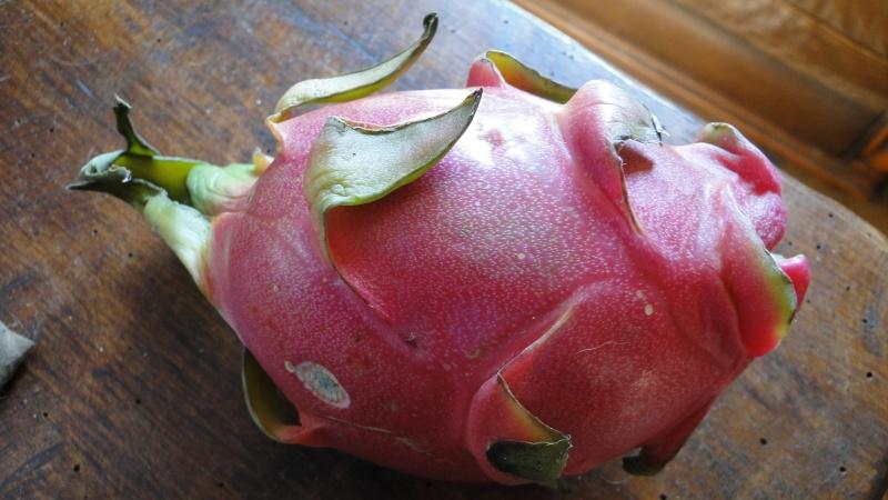PHOTOS FLEURS FRUITS PERSOS DE DANA - Page 20 Fruit_10