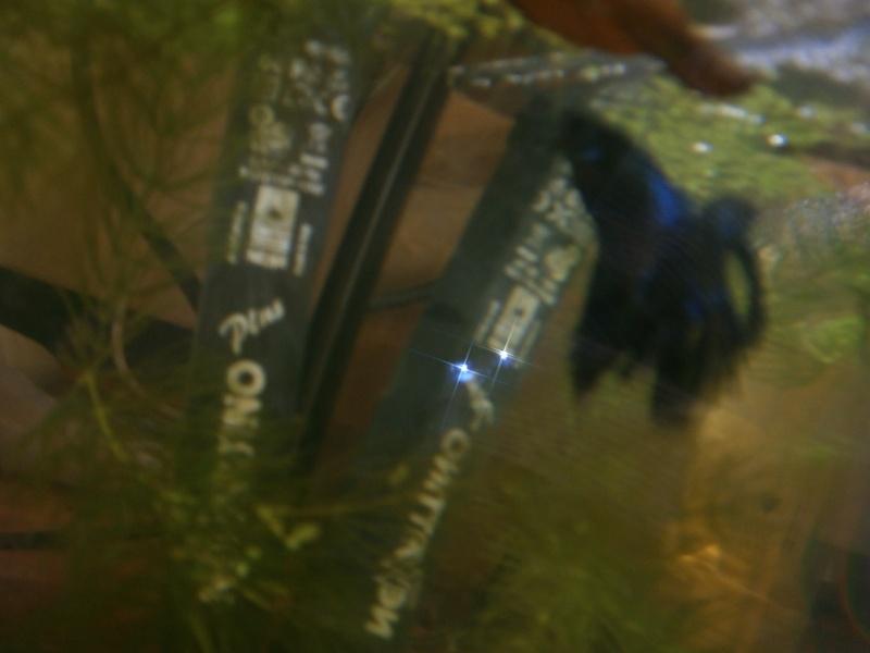 Lancement de ma 1er repro Black Orchid HM X Mullti HM P9060014