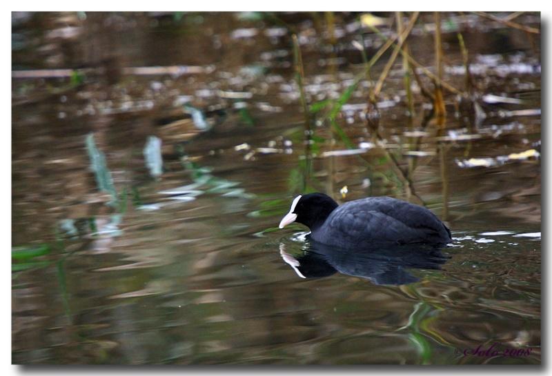 Petite sortie Beluxienne dans la reserve naturelle de Remerschen --les photos-- Dpp07d16