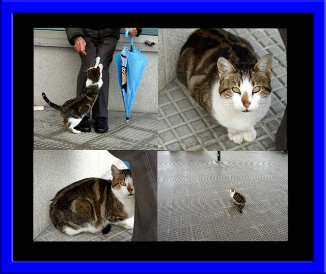 Gato en la calle necesita un hogar Imagen10