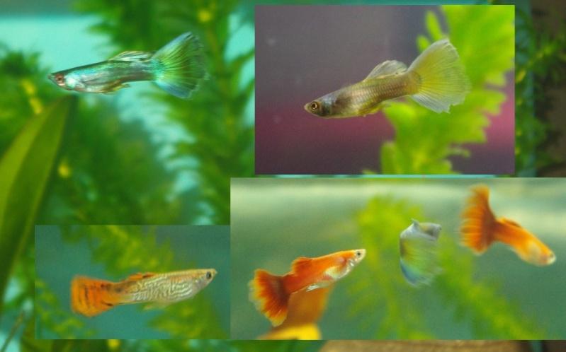 110L Mon 1ere Aqua 4_gupp10