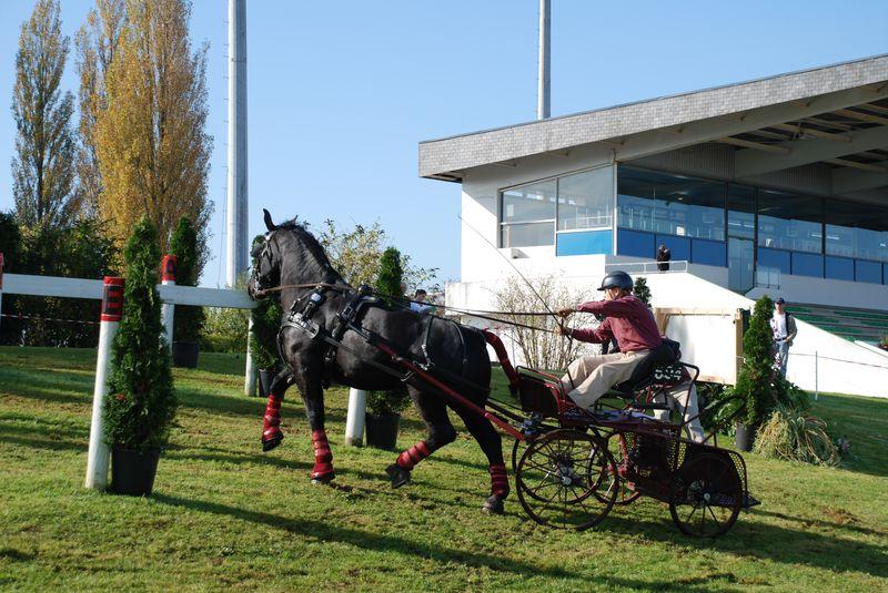 Championnat de France et journées internationales de l'attelage: Lisieux 2008 11oct232
