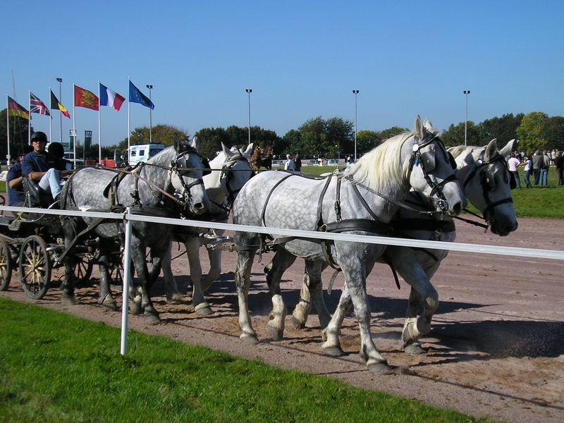 Championnat de France et journées internationales de l'attelage: Lisieux 2008 11oct279