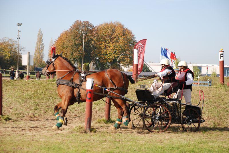 Championnat de France et journées internationales de l'attelage: Lisieux 2008 11oct285