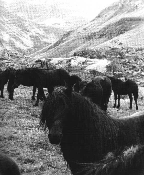 Une histoire, une anecdote, une vie peu commune d'un cheval, d'un cavalier, d'un meneur... Bild0610