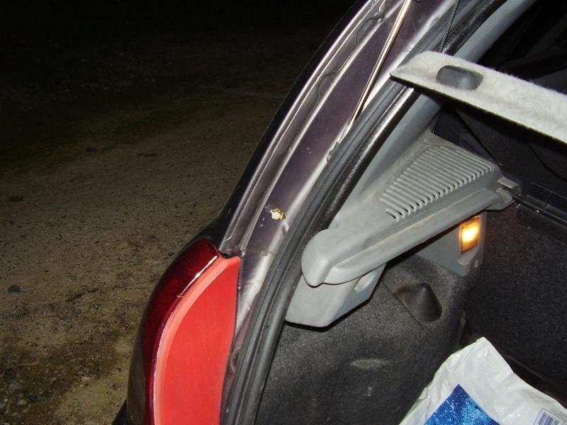 Guêpes Poliste toiture /voiture P9110010