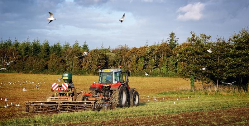 Andouar - l'agriculture Bretonne Dsc_0212