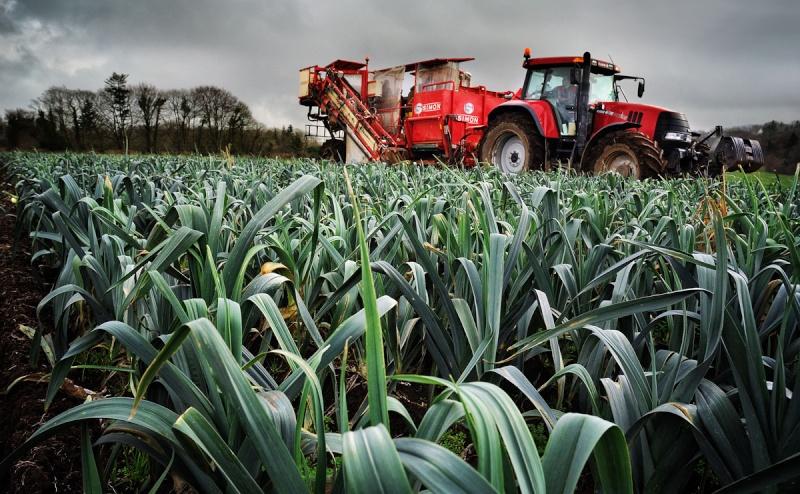 Andouar - l'agriculture Bretonne Dsc_1110
