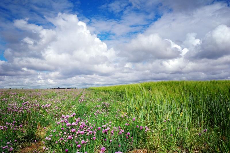 Andouar - l'agriculture Bretonne Dsc_5713