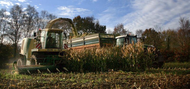 Ensilage de maïs 2008 - Page 9 Ensila11