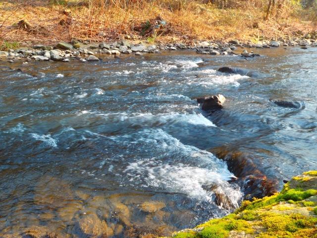 quels que photo de ma rivière pour l'ouverture de la truite Photo110