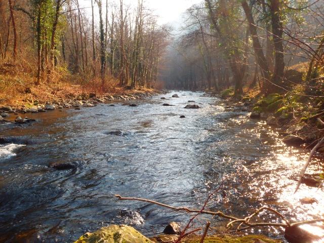 quels que photo de ma rivière pour l'ouverture de la truite Photo111