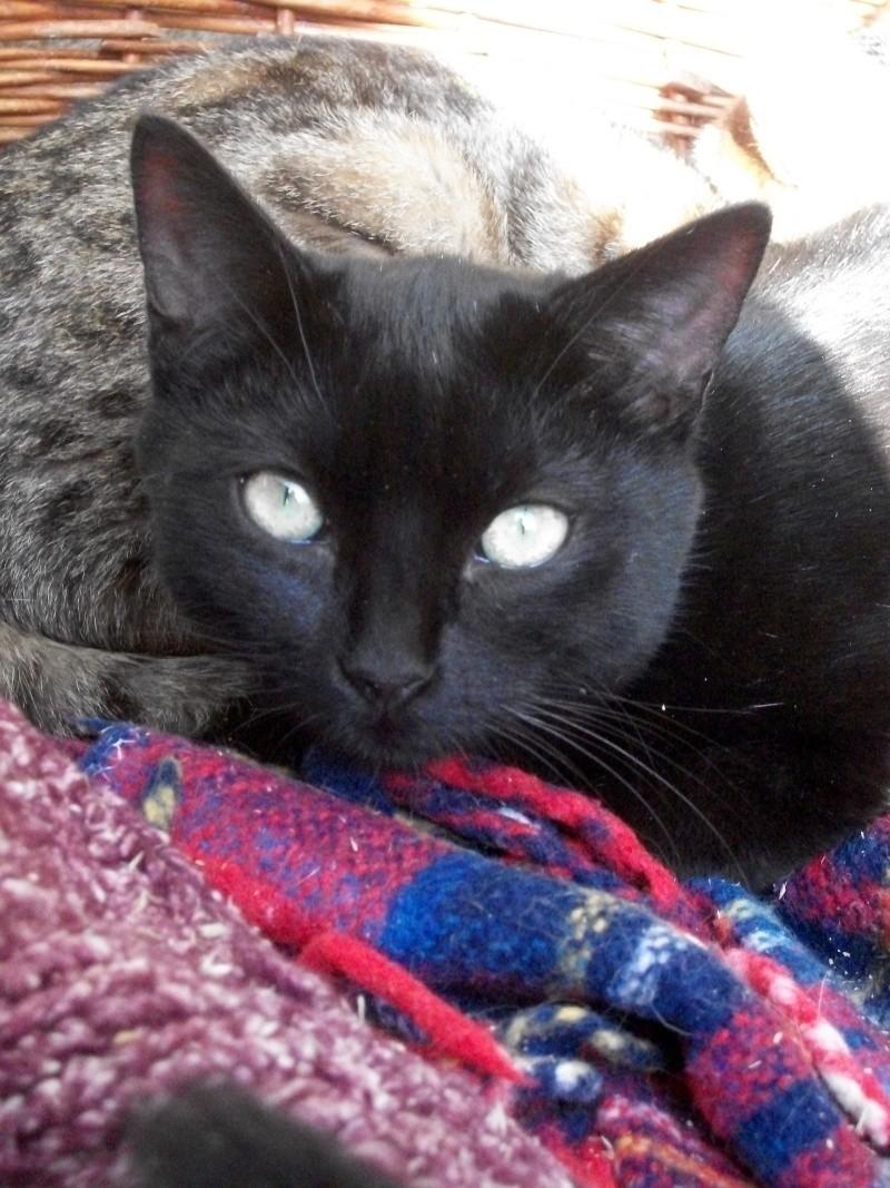 PEPITO (mâle européen noir) 20_cha54