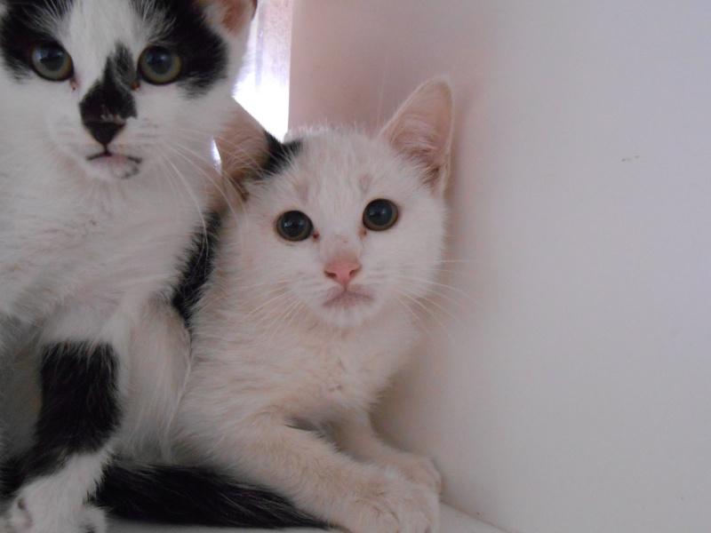 OCTOPUS (chaton mâle blanc et noir) Dscn0333