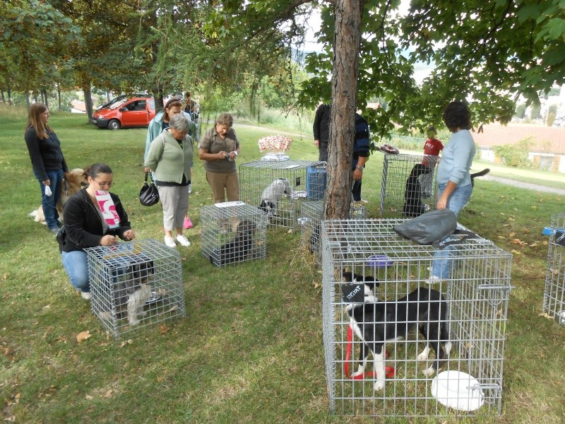 1ère journée du chien à Beaumont Dscn0334